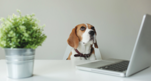 6 Cleaning Tips for Pet-friendly Offices