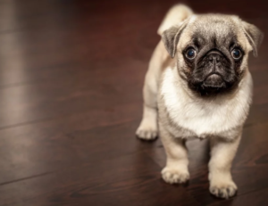 5 Tips for Creating a Pet-friendly Office